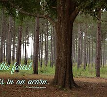 """""""All the forest is in an acorn"""" by proverbproject"""