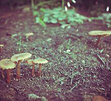 Forest Mushrooms by lightwanderer