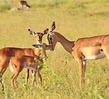 Impala - Motherly Love in Nature by LivingWild