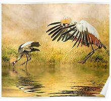 Grey Crowned Cranes. Poster