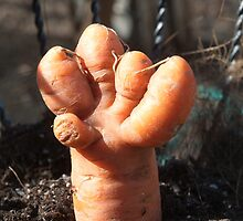 It came from the Garden - Carrot Hand by Barry Doherty