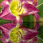 Reflection of a Flower by imagetj