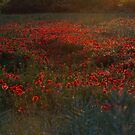 Summer Poppies by Sue  Cullumber