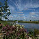 Arboretum View by Lynn Gedeon