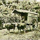 A digital painting of a two-wheeled cart drawn by two buffalo in Java 19th century by Dennis Melling