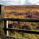 Yorkshire Moors by Marylou Badeaux