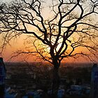 A Sunset & A Tree by Neha  Gupta
