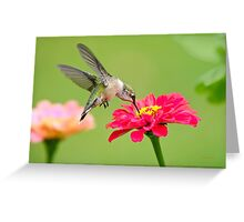 Hummingbird Waiting in the Wings Greeting Card