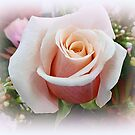 PINK ROSE WITH BABY BREATH  by Elaine Bawden