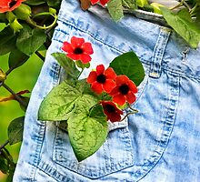 Pocket Full of Posies by Christina Rollo