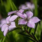 Pink shrub near top of track Leith Park 201408300421  by Fred Mitchell