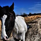 Wild HORSES by Ann Eldridge