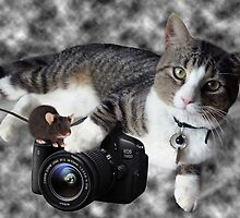 "(CAT) ""SAY CHEESE"" (MOUSE)""DID SOMEONE SAY CHEESE?"" CAT & MOUSE PHOTOGRAPHER - PICTURE & CARD by ✿✿ Bonita ✿✿ ђєℓℓσ"