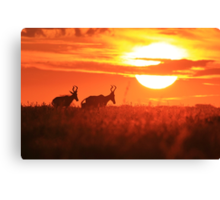 Red Hartebeest - Free and Golden - African Wildlife Canvas Print