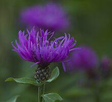 blue flower in spring by spetenfia