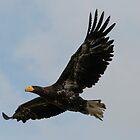 Flight of the Eagle  by Rob Hawkins