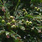 Autumn Cometh - Horse Chestnut by lezvee