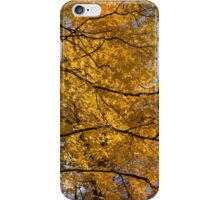 Golden Leaves and Dark Branches - Autumn in the Forest iPhone Case/Skin