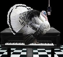 *•♪♫•*TURKEY TOM SINGING-COLD TURKEY HAS GOT ME ON THE RUN*•♪♫•* by ╰⊰✿ℒᵒᶹᵉ Bonita✿⊱╮ Lalonde✿⊱╮