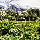 Cook's Meadow - Yosemite Valley - California USA by TonyCrehan