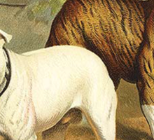 Vintage Painting of English Bulldogs Sticker