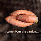 Close-Knit Carrot by Barry Doherty
