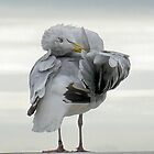 Well Groomed Gull..................... by lynn carter