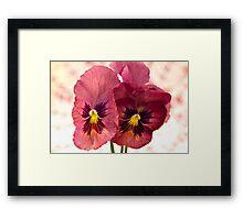Pretty Pansies Framed Print