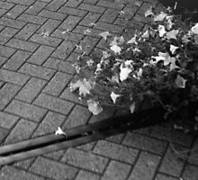 Flowers on the pavement (b&w option) by ivylens