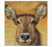 Waterbuck - Focused Stare - African Wildlife Kids Clothes