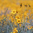 Field of Flowers by Loree McComb