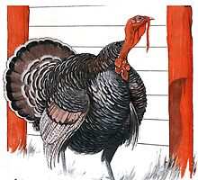 Vintage illustration of a Thanksgiving Turkey by BravuraMedia
