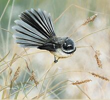 'Morning Light - Fantail'  by Marie-Claire Colyer