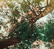 Treetops by Leah Flores