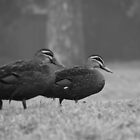 Ducks in Fog by Karen E Camilleri