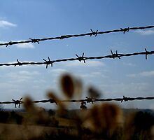 English Landscape Barbed Wire Fence Blue Sky by Emilie Crouch