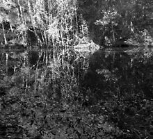 swamp abstract by avalyn