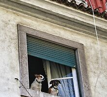 Lisbon Castle Waldorf And Statler Dogs by Menega  Sabidussi