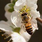 Honey Beee by SeeOneSoul