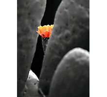 Beauty and the beast. Photographic Print