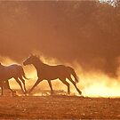 """""""HORSES IN SILHOUETTE"""" at DUSK, RUNNING WILD,RUNNING FREE by Magaret Meintjes"""