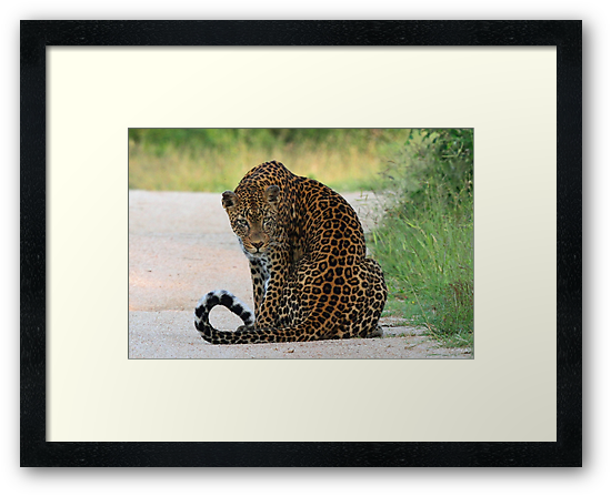 A special leopard ! by jozi1