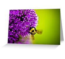 Milkweed Flower with Bee Greeting Card