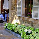 White Shutters And Green Hydrangea by Fara