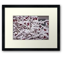 Snow On The Elderberries  Framed Print