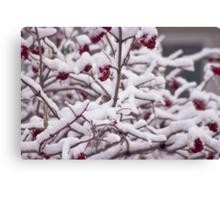 Snow On The Elderberries  Canvas Print