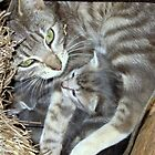 Mother and kitten by Julie Sleeman