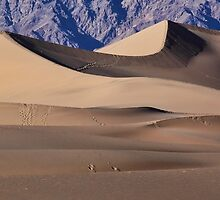 Leave Only Footprints by Ann  Van Breemen