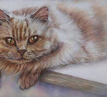 Cat Art - Long Haired Cat Staring at You by AlessandraArt