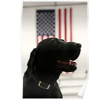 All-American Black Labrador Poster
